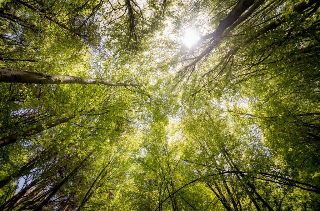 Was es jetzt im Wald zu entdecken gibt